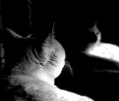 st/nt cdt 2018 (carlosdeteis.foto) Tags: carlosdeteis galiza galicia blackandwhite blancoynegro brancoenegro
