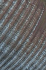Corrugated Iron 24 (steveholding8) Tags: corrugatediron rust abstract texture metal l