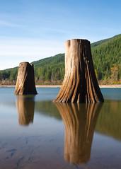 The Two of Them (John Westrock) Tags: rattlesnakelake longexposure treestumps reflection water lake bluesky landscape vertical johnwestrock canoneos5dmarkiii canonef2470mmf28lusm pacificnorthwest washingtonstate bwnd1000x