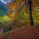 Autumn at the Falls of Moness thumbnail