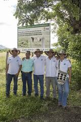 Proyecto: Desarrollo y uso de recursos forrajeros en sistemas sostenibles de producción bovina para el departamento del Cauca