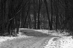 Downhill (BRB1952) Tags: michigan mayburystatepark