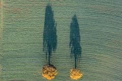 Coloured Oak Trees (Aerial Photography) Tags: by la ndb 14112016 5sr22218 abendlicht ackerbau baum bavaria bayern bäume deutschland eiche farbe feld fotoklausleidorfwwwleidorfde fotoklausleidorfwwwleidorfaerialcom gelb germany grafik grün herbst landscapeandnature landschaft landschaftnatur landwirtschaft laubbaum luftaufnahme luftbild p1 region schatten schattenstimmung stimmung unterfroschham vilsheim zwei zweibäume aerial agriculture autumn color colour deciduoustree eveninglight field foliagetree graphicart graphics green landscape landscapenature leaftree mood nature oak outdoor shade shades shadow shadows sunset tree trees two twotrees verde yellow vilsheimlkrlandshut bayernbavaria deutschlandgermany deu