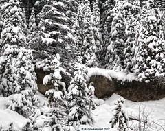 Scene along the Icefields Parkway during a Snowstorm No.1 (PhotosToArtByMike) Tags: icefieldsparkway snow snowing snowstorm banffnationalpark saskatchewanrivercrossing canadianrockies banff albertacanada mountain mountains alberta