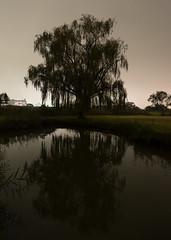 #313 Willow tree and reflection at night (tokyobogue) Tags: tokyo japan ukimafunado itabashi 365project nikon nikond7100 d7100 tamron tamron1024mmdiiivc night tree reflection longexposure nature water willow