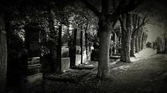 Souterrainwohnungen in der Schlussallee (Maquarius) Tags: jüdischer friedhof würzburg werner von siemens strase grabsteine gräber franken unterfranken mainfranken