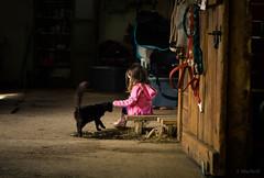 pet (Jen MacNeill) Tags: black cat pet kitten animal farm barn cats