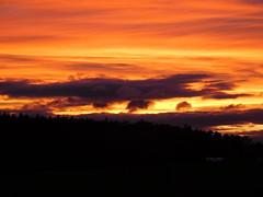 .....mit kleinen Wölkchen.... (elisabeth.mcghee) Tags: abendrot abendhimmel abendsonne sunset sonnenuntergang himmel sky wolken clouds unterbibrach bäume trees wald forest oberpfalz upper palatinate