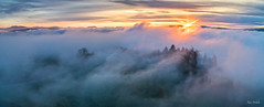 Emerging trees in the mist (xanwhite305) Tags: fog haze sundown twilight colors trees horizon gliding drone view outside scenery landscape mountainscape clouds nature blue light sun wow xanwhite
