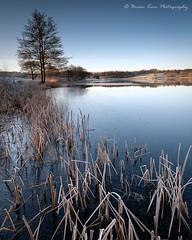 Frozen (.Brian Kerr Photography.) Tags: visitscotland scotland scottishlandscapes briankerrphotography nikon d850 tamron2470mmf28g2 winter weather frozen landscapephotography photography dumfriesandgalloway tree formatthitech vanguarduk