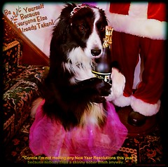 Party Animal...Celebrating 2019 (ASHA THE BORDER COLLiE) Tags: happy new year 2019 celebrations funny dog picture border collie party animal champaign girl christmas ashathestarofcountydown connie kells county down photography