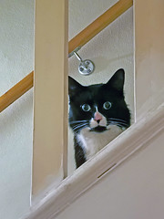 That feeling someone's watching you (bric) Tags: cat stairs