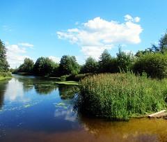 Пейзаж (lvv1937) Tags: лето река пейзаж камышидеревья