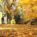 L'autunno più bello (The best fall)
