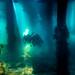 Flinders Pier Underwater-8