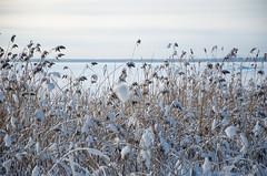 Joensuu - Finland (Sami Niemeläinen (instagram: santtujns)) Tags: joensuu suomi finland pohjoiskarjala north carelia karelia kuhasalo lake järvi frozen sunset auringinlasku talvi winter luonto nature