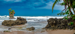 Respire à fond/Take a deep breath/Andas djupt/Respira profundamente (Elf-8) Tags: beach sea caribbean palmtree coral sandwave costarica