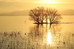 Golden hour (Teruhide Tomori) Tags: lakebiwa shiga kohoku landscape winter lake japan japon water afternoon evening nature 琵琶湖 湖北 日本 関西 滋賀県 自然 風景 夕景 sky sunset tree happyplanet asiafavorites