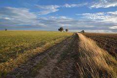 Chemin de campagne (Excalibur67) Tags: nikon d750 sigma globalvision art 24105f4dgoshsma paysage landscape ciel cloud sky nature nuages arbres trees campagne champs chemin
