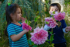 My 2 sunshines! (ineedathis, Everyday I get up, it's a great day!) Tags: grandchildren eleni justin family twins love flowers garden nikond80 ornamentalgrasses pond weepingatlanticcedar dahlia plant pink evergreen vine clematis cypressvine brother sister