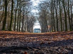 Nijenburg (johan wieland) Tags: johanwieland 2019 nijenburg heiloo winter bomenlaan laan landhuis beukenlaan
