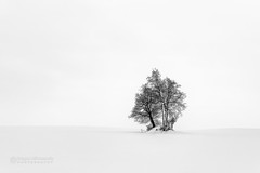 Winter dream (Dragan Milovanovic photography) Tags: cantonsdelest easterntownships canada québec blackandwhite nature tree winter scenery sonyilca99m2 sonyslta99ii tamron28300mm mood landscape snow outdoors noperson draganmilovanovicphotography minimalism blackwhite