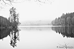 DSC05877_web (m.bobby756) Tags: see sea nebel fog wasser water natur nature schweden sweden blackandwhite trees bäume