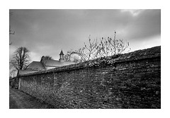 Garden Wall (fudgefishmono) Tags: zeiss biogon 21mm wideangle voightlanderviewfinder leica m7 trix kodak xtol epson v550 perfection scan gracehill ballymena northernireland tonalitypro