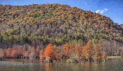Watauga Lake 637 (Steve4343) Tags: steve4343 nikon 7200 appalachian trail cherokee national forest red green blue yellow orange white clouds sky beautiful tennessee autumn beauty johnson county lake watauga cloud colorful woods garden gardens happy leaves rocks wildlife landscape mountain tree trees grass water wood butler summer spring macro flower flowers at 637