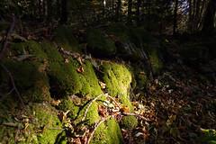 mystery of light II (gabriela vetsch) Tags: moos mosss grün green blätter leaves baum tree stein stone stones light sun sonnenlicht herbst autumn fall schweiz switzerland berneroberland hasliberg ursiflue