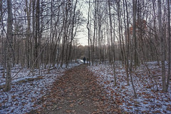 Ready or not, the snow is here (beyondhue) Tags: walk woods forest fall winter snow leaves people couple beyondhue ottawa green belt hike path trail recreation activity fitness fresh air trees ontario canada