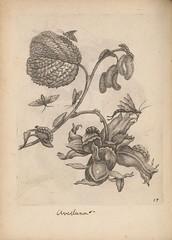 n321_w1150 (BioDivLibrary) Tags: development earlyworksto1800 insects lepidoptera metamorphosis pictorialworks plants lloydlibraryandmuseum bhl:page=53726191 dc:identifier=httpsbiodiversitylibraryorgpage53726191