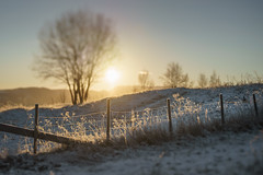 Highlighted fence and frost (Helena Normark) Tags: fence oldfence frostyfence frost beautifulfrost winter heimdal trondheim sørtrøndelag norway norge sonyalpha7ii a7ii 50mm lensbaby edge50 lensbabyedge50 lensbabylove seeinanewway
