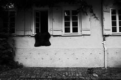 Fresh air for the hide (stefankamert) Tags: stefankamert hide dove window house street tübingen tones skin ricoh gr grii blackandwhite blackwhite noir wall