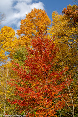 HillsDales2018_DSC_0018 (KKfromBB) Tags: kkfrombb nikon nikond5100 hilldales metropark five rivers metroparks autumn fall 2018 outdoor nature color tree leaf