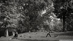 A Man and his Bassett Hound (Eric Gross) Tags: dogs dog centralpark morning blackandwhite monotone newyork upperwestside