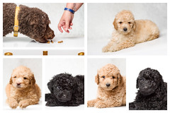 Sam, milo, Uziah, Violet and Washington-4.jpg (___INFINITY___) Tags: 6d aberdeen animal canon darrenwright dazza1040 dog eos infinity pet portrait