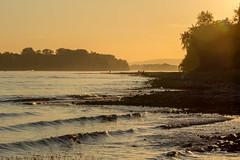 River Scene (Marilely) Tags: riverbank sunset sonnenuntergang sunlight water waves shore ufer sonnenlicht wasser river fluss rhein rhine nature landscape landschaft rheingau