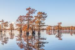 trees on mirror lake (FollowingNature (Yao Liu)) Tags: followingnature swampcypress baldcypress fallcolors fallfoliage visittexas texas caddolake