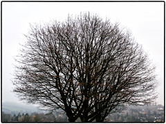 Day 319 Winter's nearly here (Dominic@Caterham) Tags: winter trees sky leaves hills valley houses