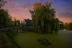 House behind the tree (l.cutolo) Tags: on1raw sonya7iii windmills silkycould village flickr blue netherlands dutchlandscape aperture zaanseschans ngc longexposure oldtowns calm tlp dusk millscape water worldtrekker lights hdr sony silkywater reflections zaandam lucacutolo landscape bluehours sonyfe1635mmf28gm