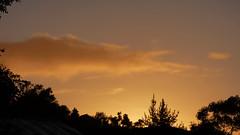 Photo effects with Paintshop Pro (Sandy Austin) Tags: panasoniclumixdmcfz70 sandyaustin westauckland auckland northisland newzealand bird thrush sky