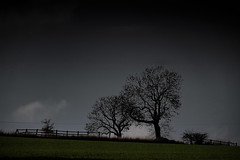 Green - The Old Fence (Malc '64') Tags: silhouette tree fence trees field green monochrome canon sky hill grass rural ossett wakefield westyorkshire yorkshire england britain uk nature outside