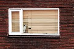 I miss the outside world (Alex Chirila) Tags: cat window bricks prisoner canon 80d efs 15–85mm f35–56 is usm