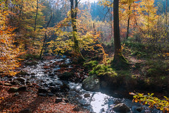 The last indian summer light (rudi.verschoren) Tags: indian summer river hoëgne belgium light landscape trees colors canon contrast cold water warm autumn exposure reflection tall outdoor overlooking sky fairy glow golden leaves lines mood woods nature