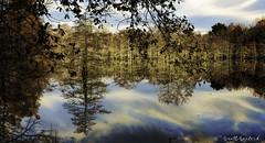 _MG_7079-Edit (Scott Sanford Photography) Tags: 6d canon cypress eos lake morning naturalbeauty naturallight nature outdoor reflection sunlight texas topazlabs water beautiful swamp trees ef24105mmf4lisusm martindiesjrstatepark