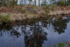 Arne 06-01-2019 16 (Matt_Rayner) Tags: arne reflections trees