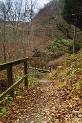 The Path through Overtoun Wood (Joe Son of the Rock) Tags: ef1740mmf4lusm overtoun overtounwood overtounestate wood forest bridge footbridge autumnleaves fence pathscaminhos