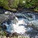 Puarenga stream (Te awa o Puarenga), Te Puia, Rotorua, NZ
