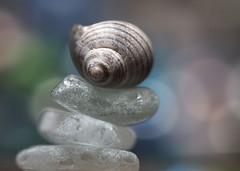 balance (skloi) Tags: balance macromonday seashell seaglass seeglas strandglas schnecke muschel blau blue weiss white